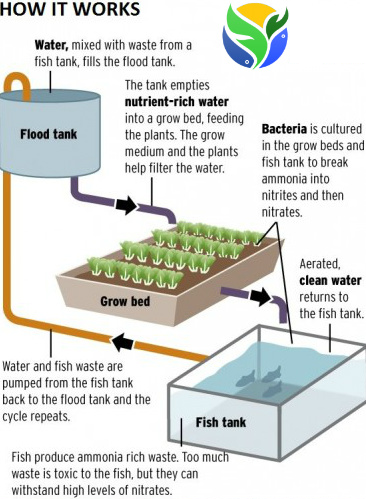 aquaponics-overview